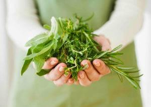 Растительные средства при лечении простатита