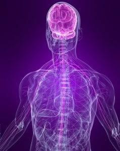 Активирует нервную систему