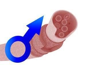 Почему не стоит половой член - причины эректильной дисфункции