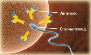 Спермограмма Мар-тест