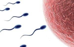 Расшифровка спермограммы