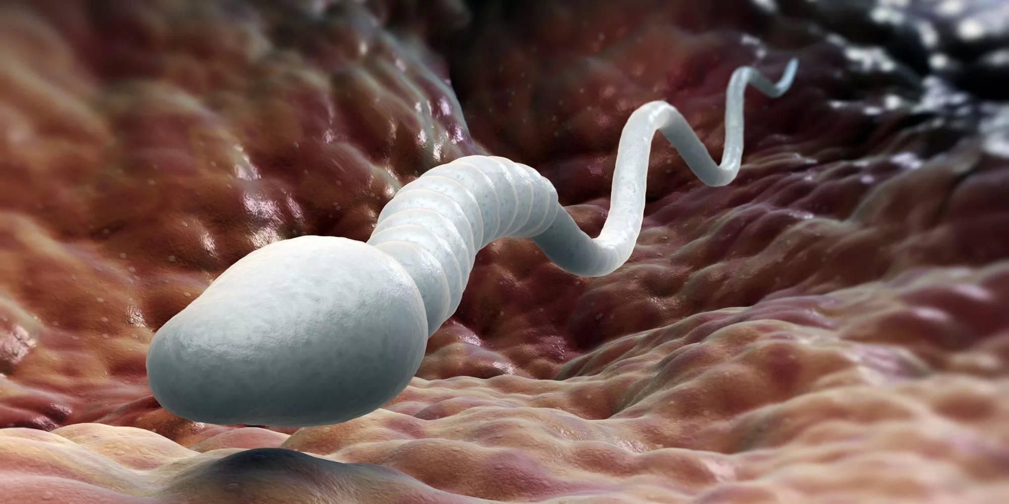 Малая активность сперматозойдов