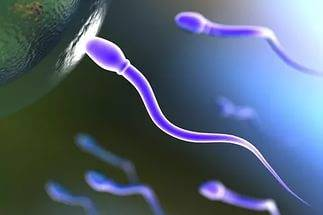 Активность сперматазоида