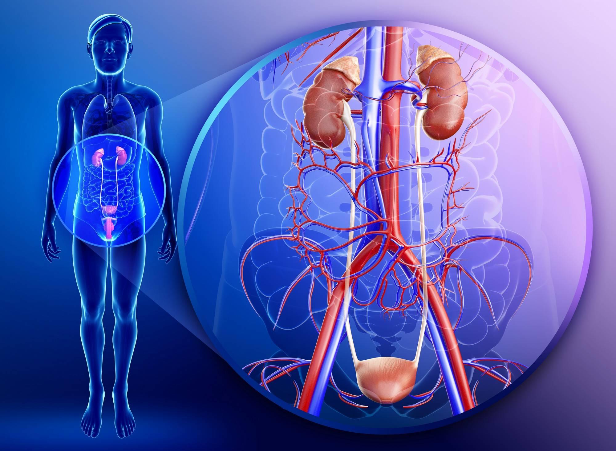 Лечение уреаплазмы у мужчин схема лечения