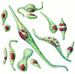 Бактериальный уретрит